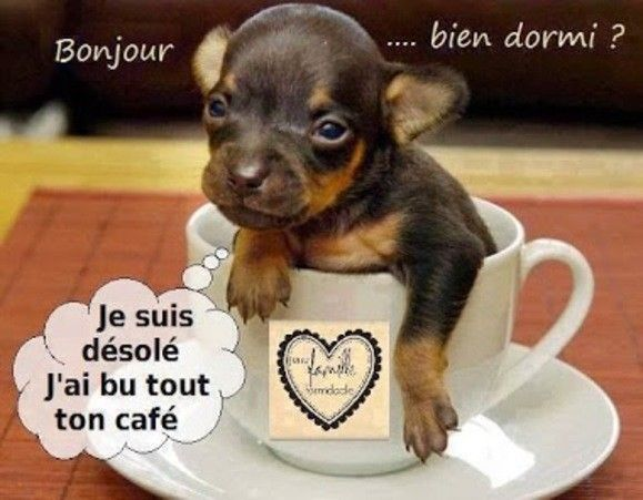 j'ai but tout le café lol !!!
